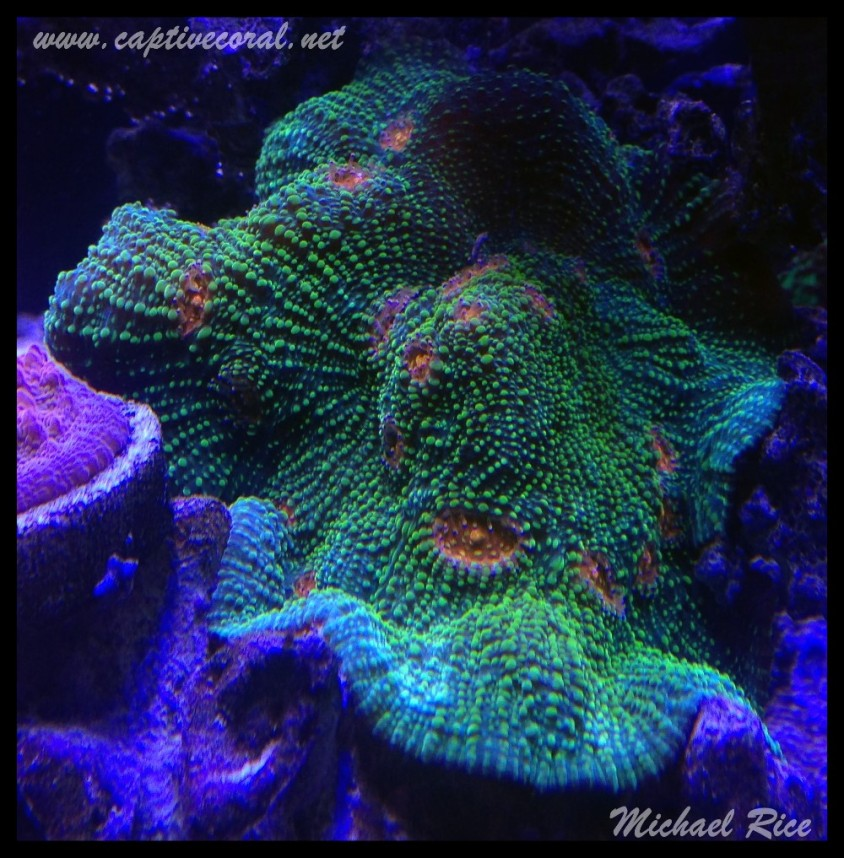 chalice_coral2015-07-22 20.26.51-1