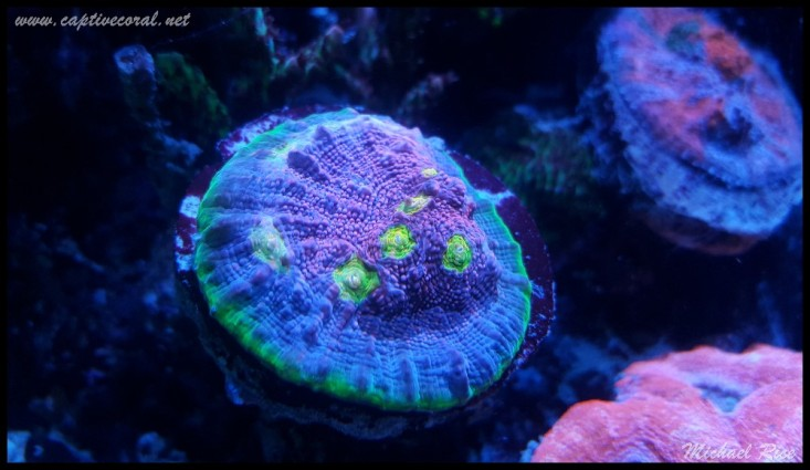 chalice_coral2015-12-19 21.20.37