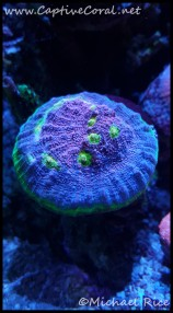 chalice_coral2016-01-14-21-21-42