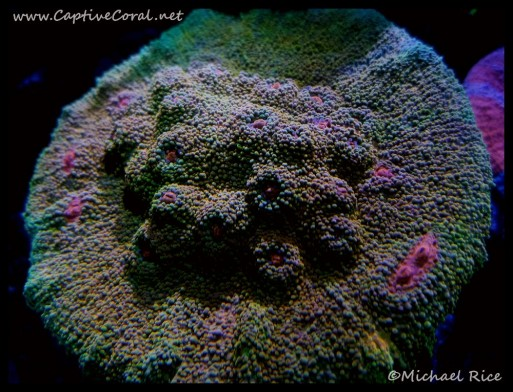 chalice_coral2016-05-29-20-33-56