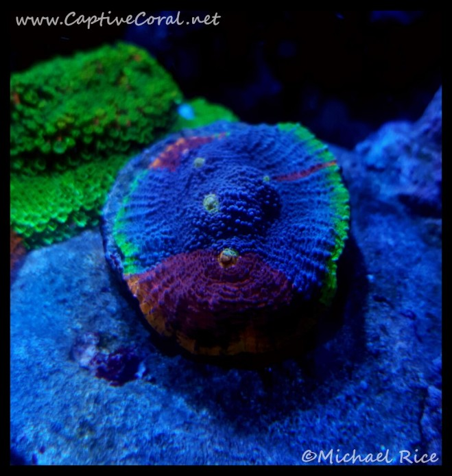 chalice_coral2016-05-31-09-20-02
