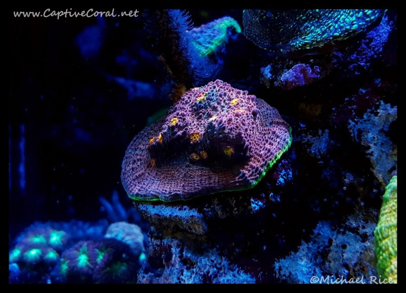 chalice_coral2016-06-20-10-16-21
