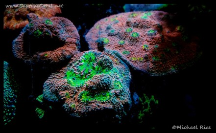 chalice_coral2016-07-17-12-14-21