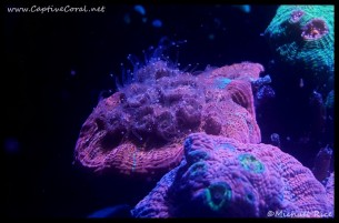 chalice_coral2016-08-16-22-37-34