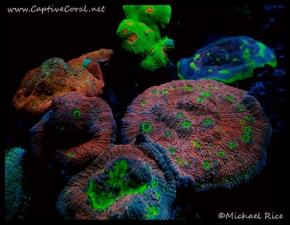 chalice_coral2016-09-06-22-10-26