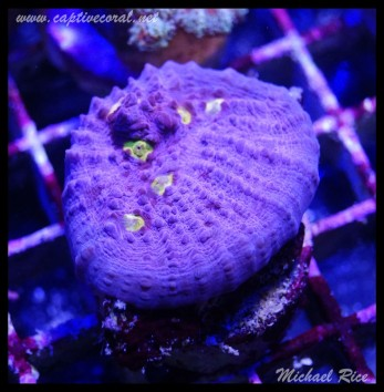 chalice_coral_DSC1008