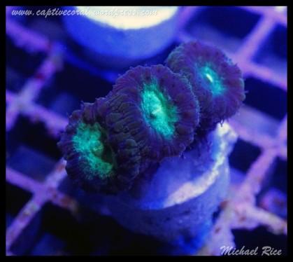 coral_images_DSC0118
