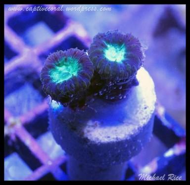 coral_images_DSC0122