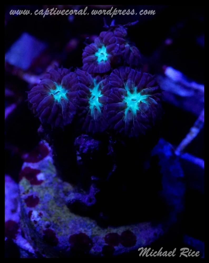 coral_images_DSC9977