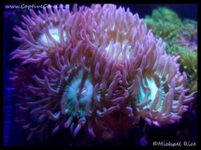 duncan_coral2016-02-18-03-27-59