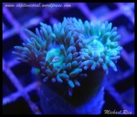duncan_coral_DSC0112