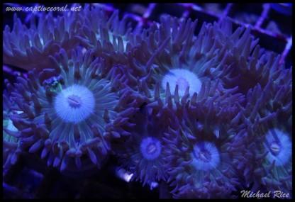 duncan_coral_DSC0888