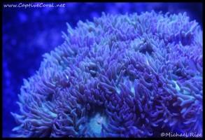 duncan_coral_dsc2670