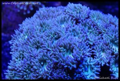 duncan_coral_dsc2781