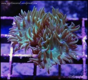 duncan_coral_DSC9370