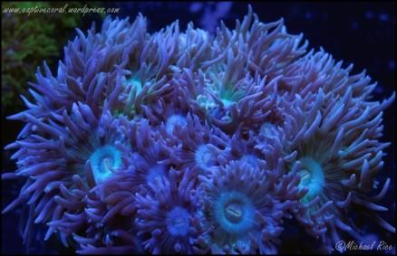 duncan_coral_DSC9394