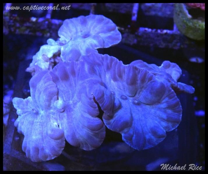 fox_coral2015-07-25 00.01.04