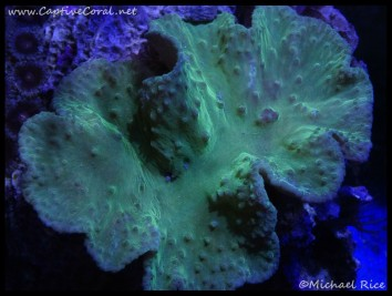 leather_coral2016-06-23-06
