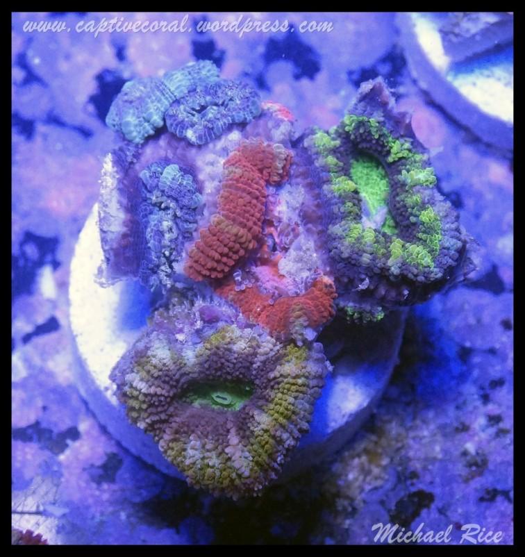 micromussa2015-07-11 23.31.18