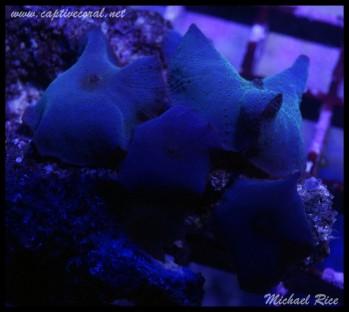 mushroom_coral2015-07-24 23.58.48