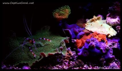 mushroom_coral2016-04-19-21-20-34