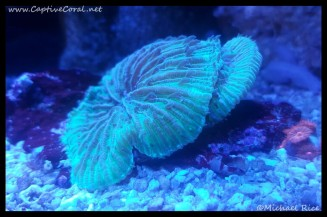 plate_coral2015-12-22-15-51-35