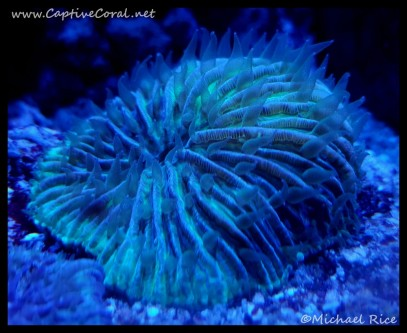 plate_coral2016-09-25-19-58-28