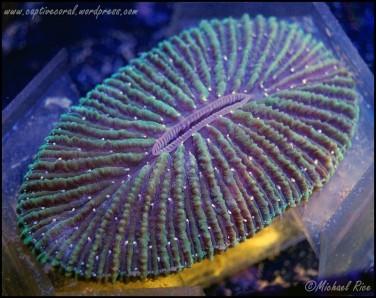 plate_coral_DSC9342