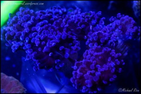 torch_coral_DSC8859