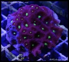 war_coral_dsc2792