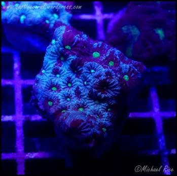 war_coral_DSC8833