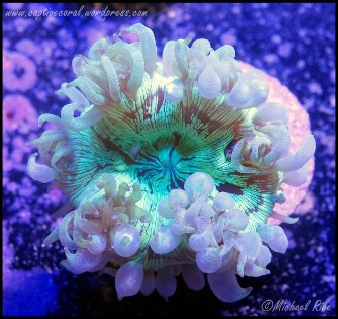 elegance_coral_DSC9311