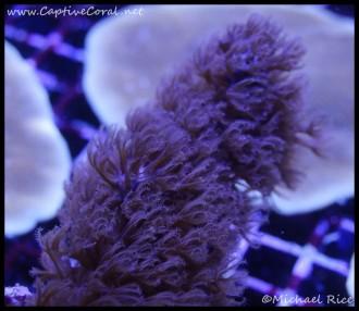 gorgonians_dsc2199