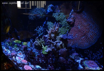 chalice_LPS_nano_reef2014-12-08 02.09.33